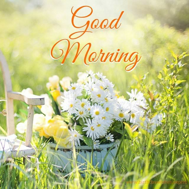 Good Morning Image With White Flowers In A Sunny Garden