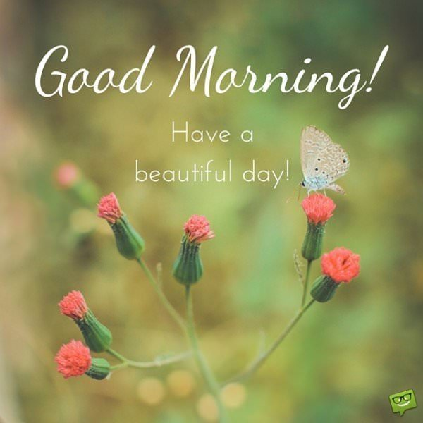 Good Morning! Have a beautiful day.