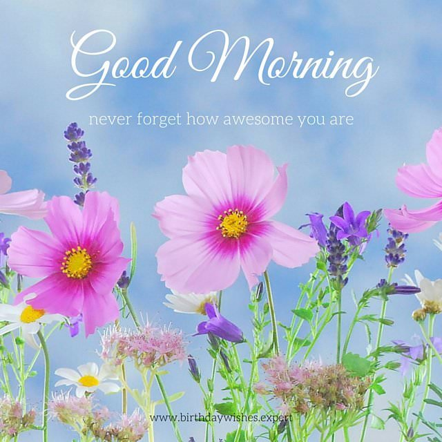 Good Morning Flowers Quotes : Beautiful flower images with inspiring good morning quotes