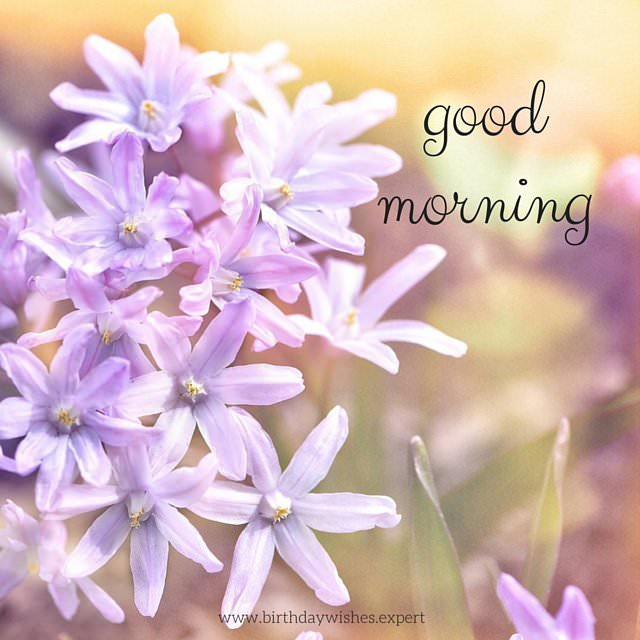 60 Beautiful Flower Images With Inspiring Good Morning Quotes