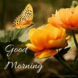 Delicate Harmony   Inspirational Good Morning Pics with Butterflies