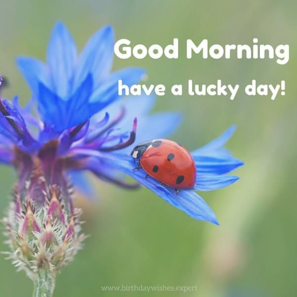 Good morning! Have a luck day!