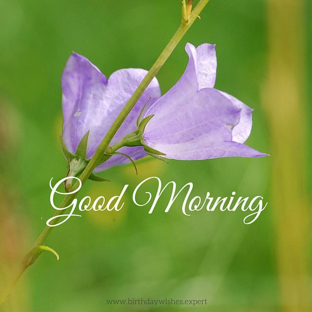 Good Morning Quotes With Flowers : Beautiful flower images with inspiring good morning quotes