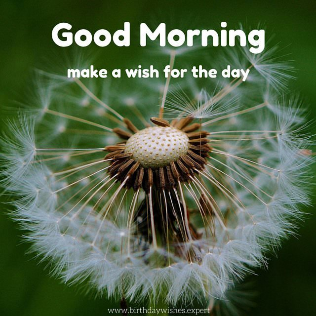 Most beautiful good morning wishes