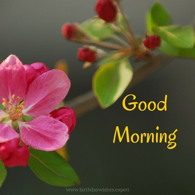 Good Morning Sunday Flowers Images : Good morning images with the most beautiful flowers