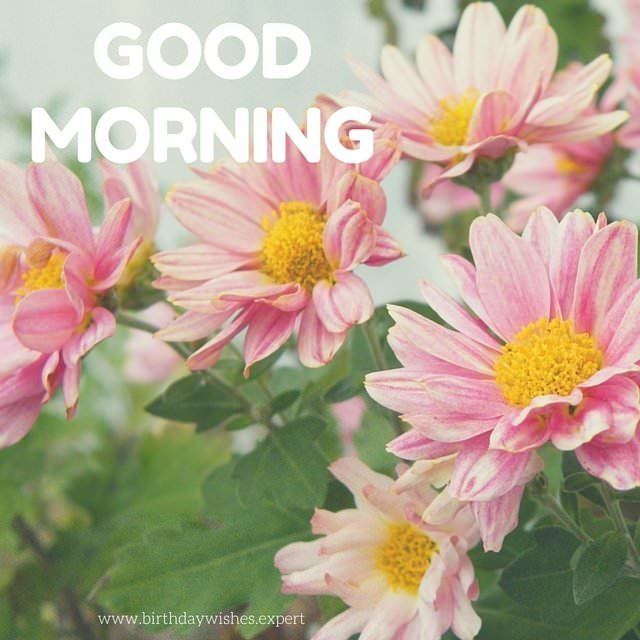 Goodmorning Unique Images: 60 Beautiful Flower Images With Inspiring Good Morning Quotes
