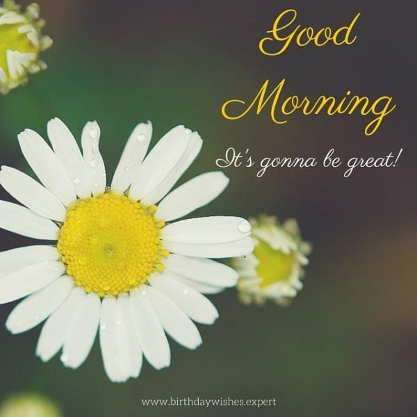 Good Morning. It's gonna be great!