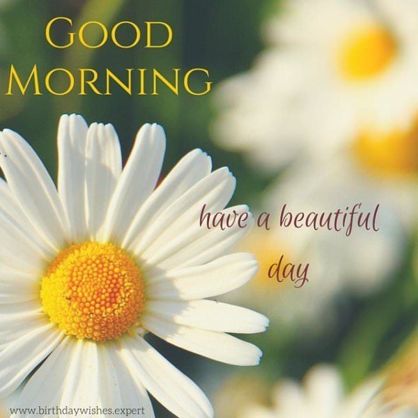 Good Morning. Have a beautiful day.