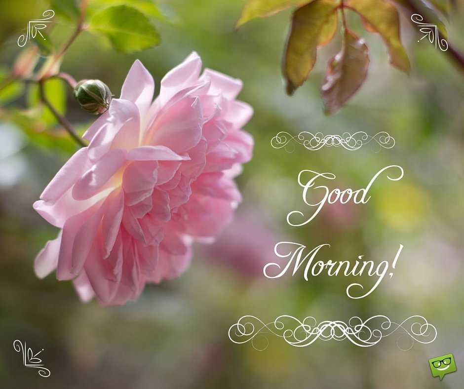 GoodMorning image with pink rose and ornamental lettering