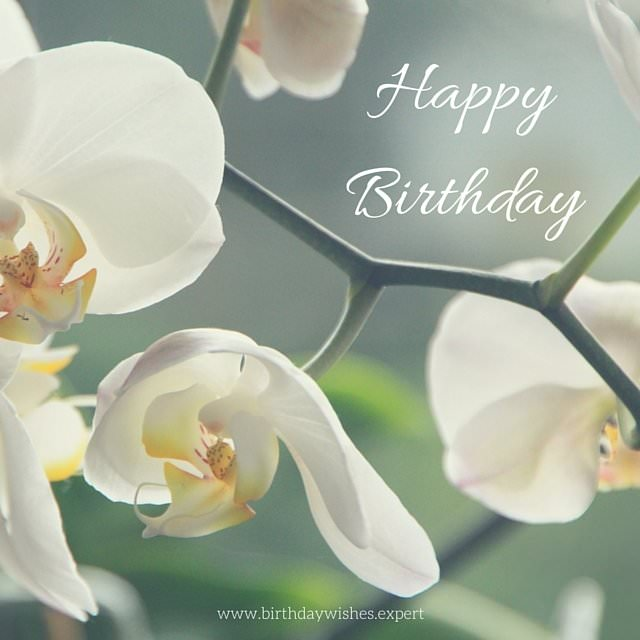 Happy Birthday wish on image with white flowers.