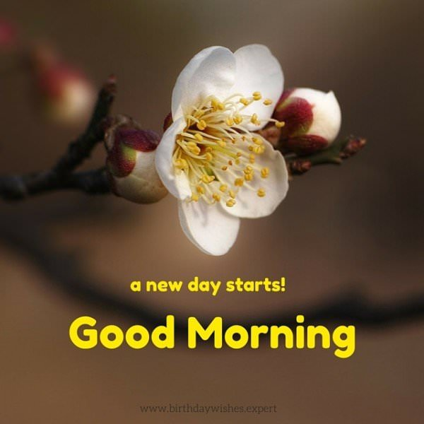 Good Morning. A new day starts!