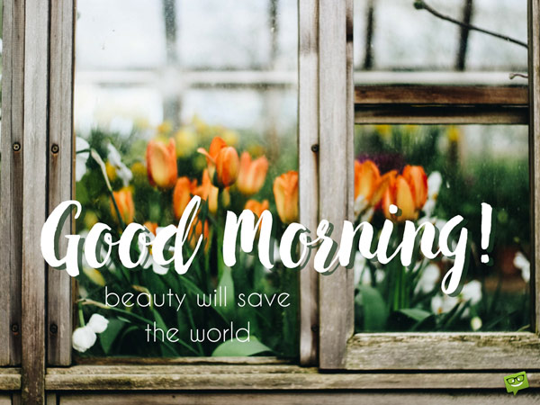 Amber Maxwell Boydell Good Morning Quote Beautiful Tulips