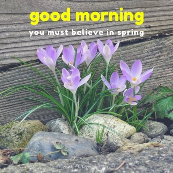 Good Morning. You must believe in spring.