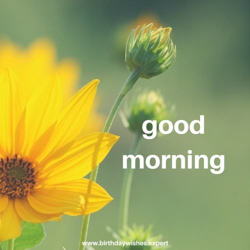 Good Morning. Have a lucky day!