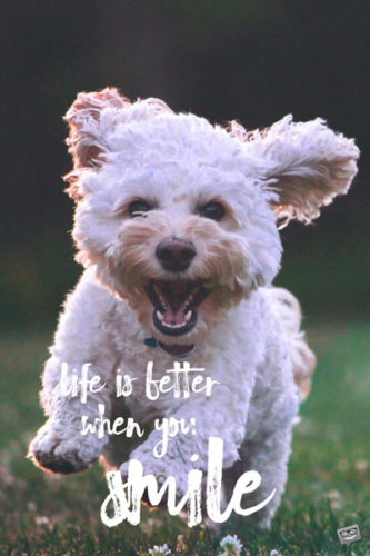 Life is better when you smile.