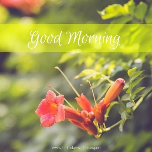 Good Morning Image with flower and sunshine