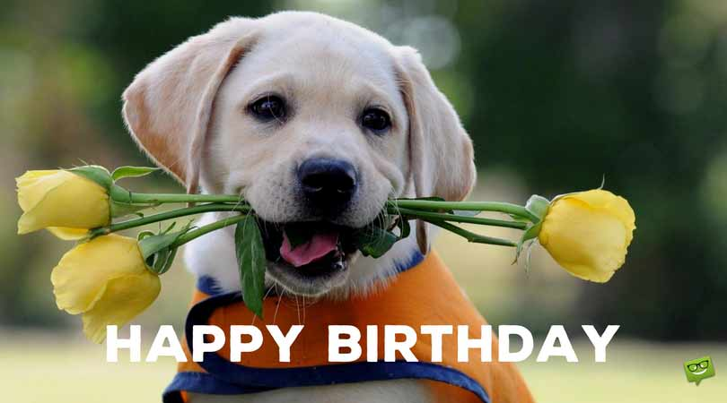 Birthday-message-on-cute-picture-of-dog-3.jpg