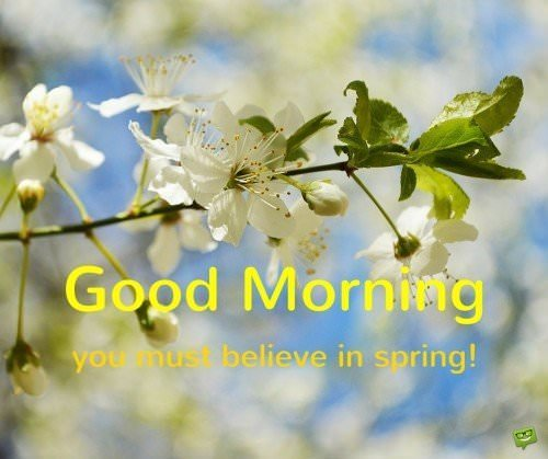 Good morning, you must believe in spring!