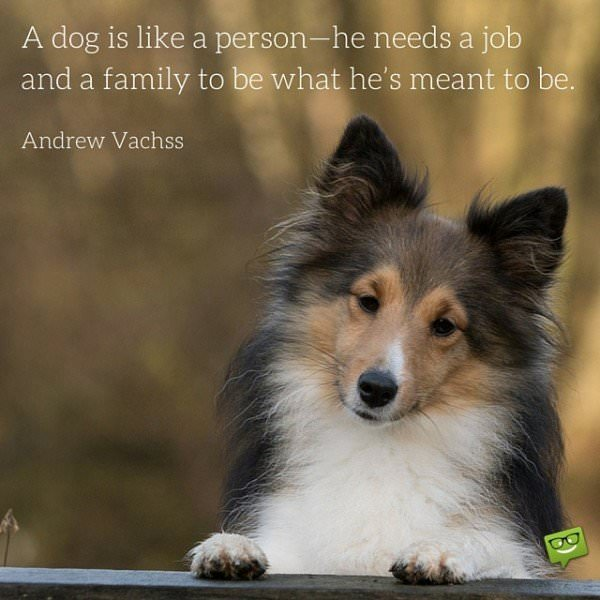 A dog is like a person -he needs a job and a family to be what he's meant to be. Andrew Vachss