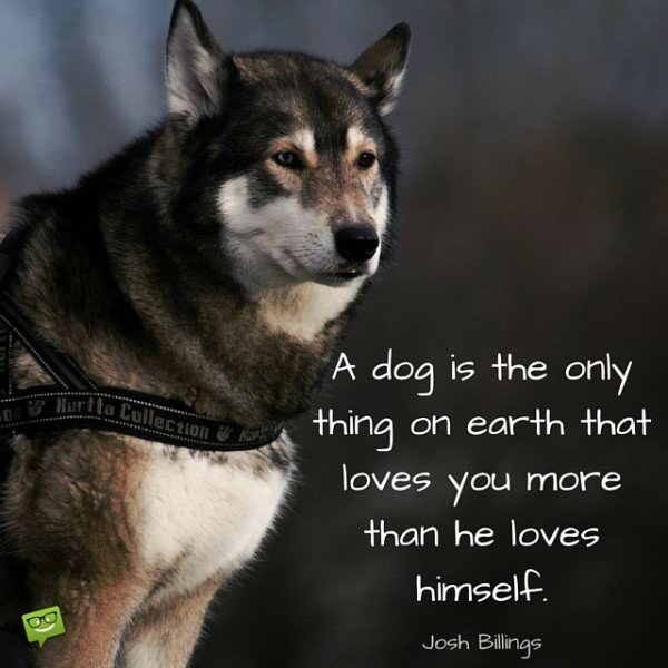 A dog is the only thing on earth that loves you more than he loves himself. Josh Bilings