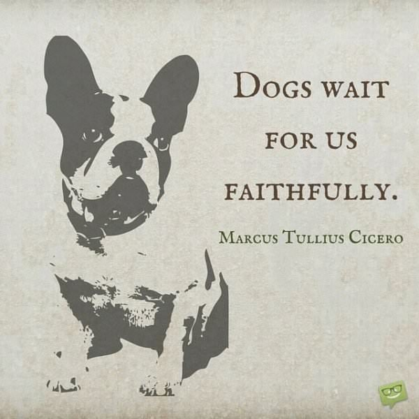 Dogs wait for us faithfully. Marcus Tullius Cicero