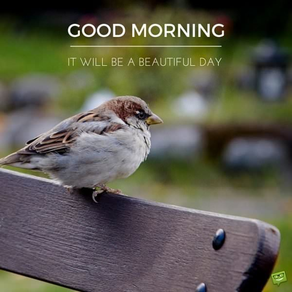 Good Morning. It will be a beautiful day.