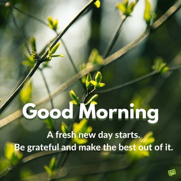 Good Morning. A fresh new day starts. Be grateful and make the best out of it.