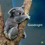 Good night image with cute animal
