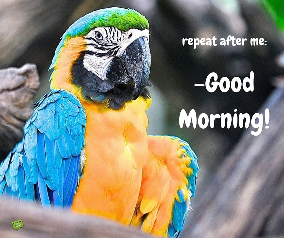 repeat after me: good Morning!