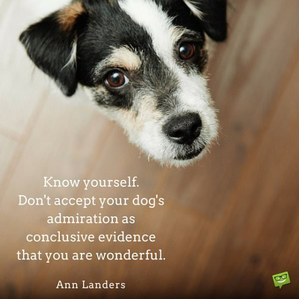 Know yourself. Don't accept your dog's admiration as conclusive evidence that you are wonderful. Ann Landers
