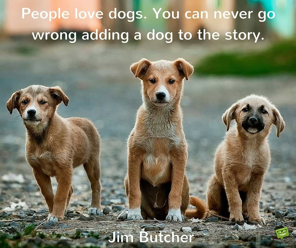 People Love Dogs You Can Never Go Wrong Adding A Dog To The Story Jim Butcher
