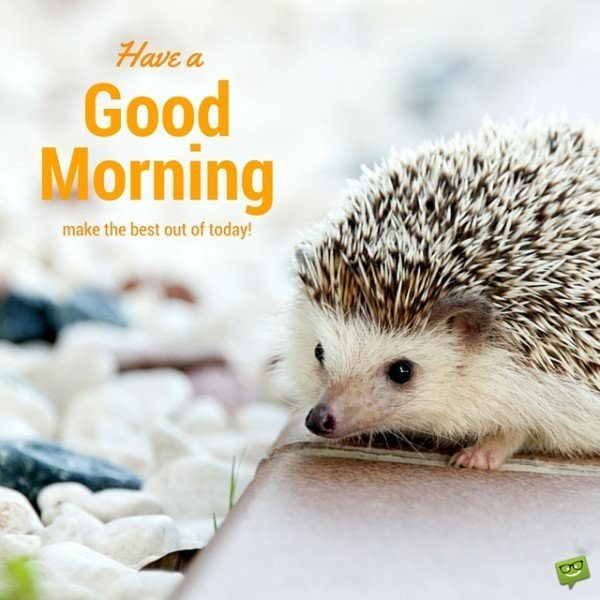 Have a Good Morning. Make the best out of today!