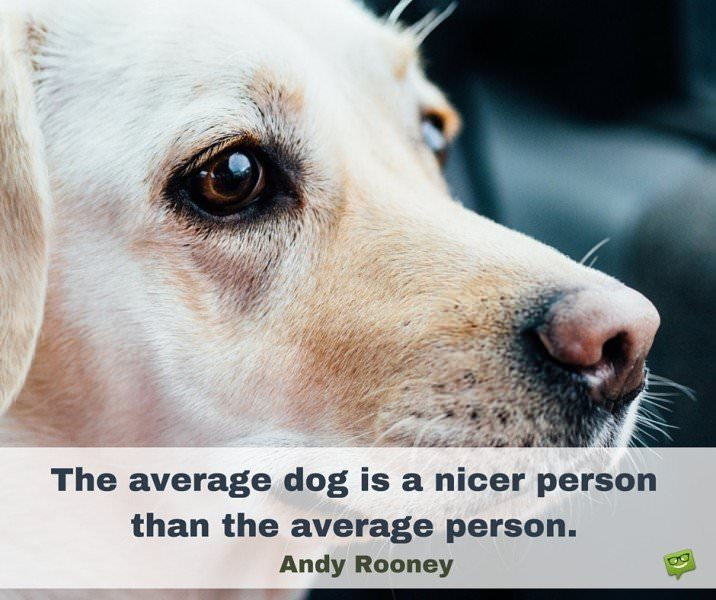The average dog is a nicer person than the average person. Andy Rooney
