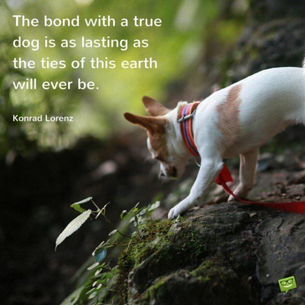 The bond with a true dog is as lasting as the ties of this earth will ever be. Konrad Lorenz
