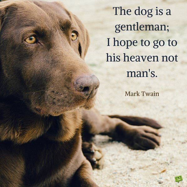 The dog is a gentleman; I hope to go to his heaven not man's. Mark Twain