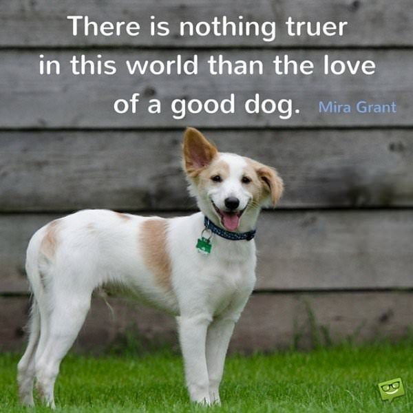 There is nothing truer in this world than the love of a good dog.