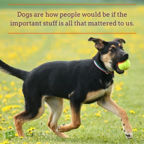 Dogs are how people would be if the important stuff is all that mattered to us.