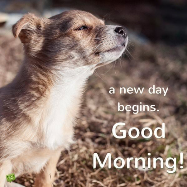 A new day begins. Good Morning!