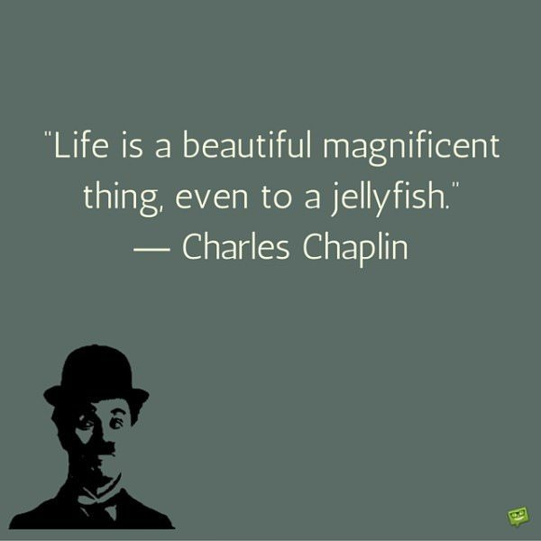 Life is a beautiful magnificent thing, even to a jellyfish. Charles Chaplin