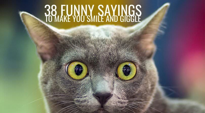 38 Funny Sayings to Make you Smile and Giggle