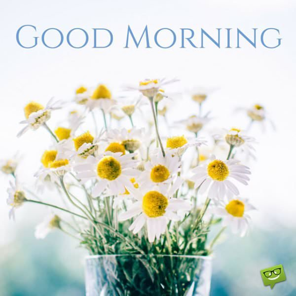 Good Morning Daisies