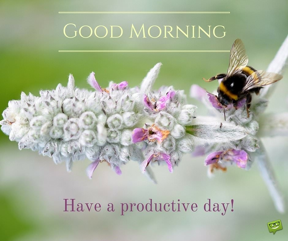 Good Morning. Have a productive day!