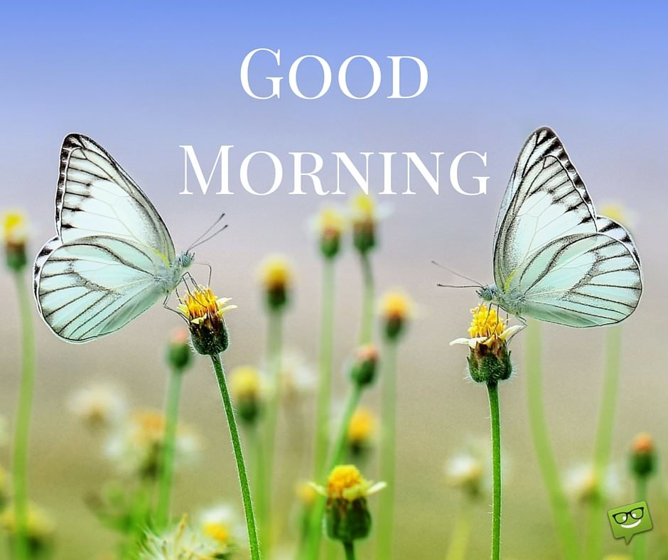 Good Morning Butterflies