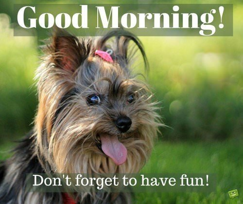 Good Morning! Don't forget to have fun!