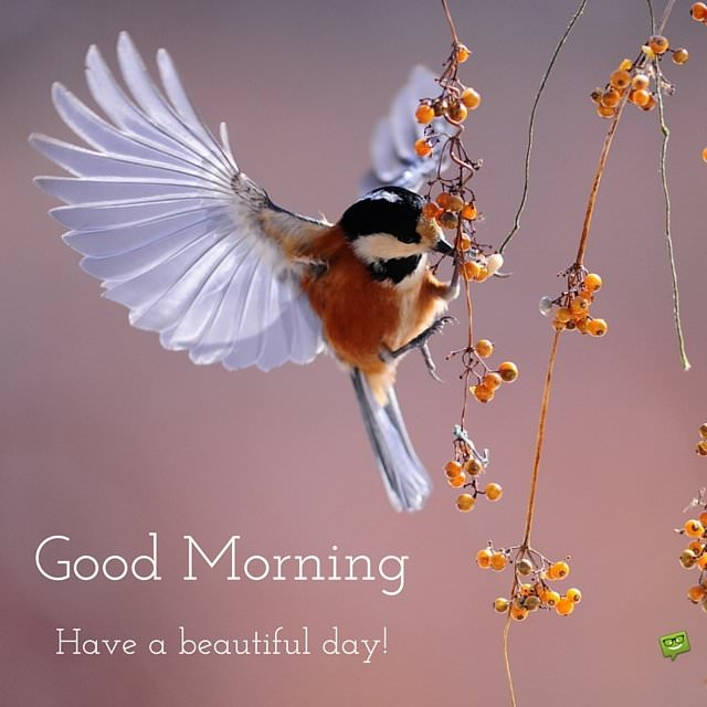 Good Morning Images With Love Birds Fresh Start Good Morning