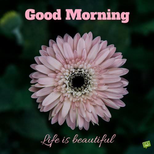 Good Morning! Life is beautiful.