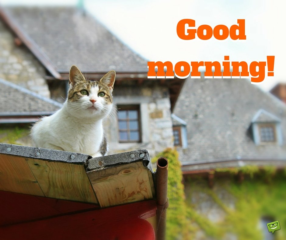 Good morning cat