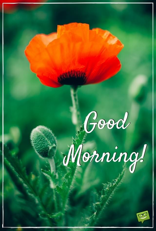 Good Morning Beautiful Red Flowers : Amazing good morning quotes and images that will inspire you