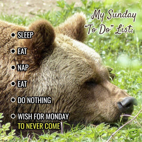 """My Sunday """"To Do"""" List: Sleep, Eat, Nap, Eat, Do Nothing, Wish for Monday to never come!"""