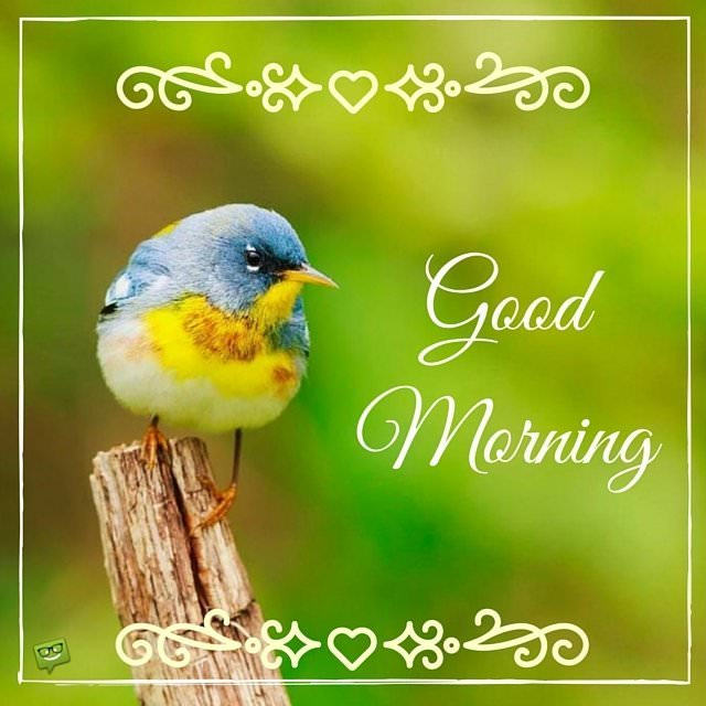 Good Morning Beautiful Birds Images : A wish for the new day good morning